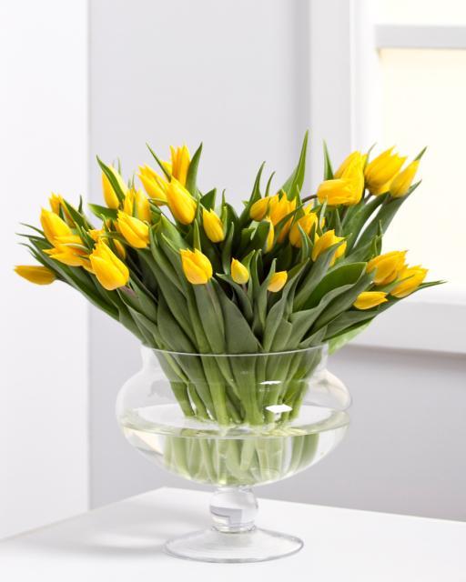 Tulipán (min. ár: 7150 Ft)