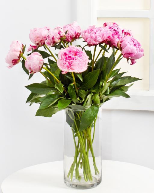 Pünkösdi Rózsa (min. ár: 4500 Ft)